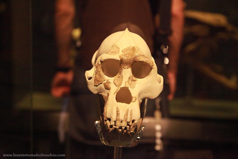 Crâne National Museum