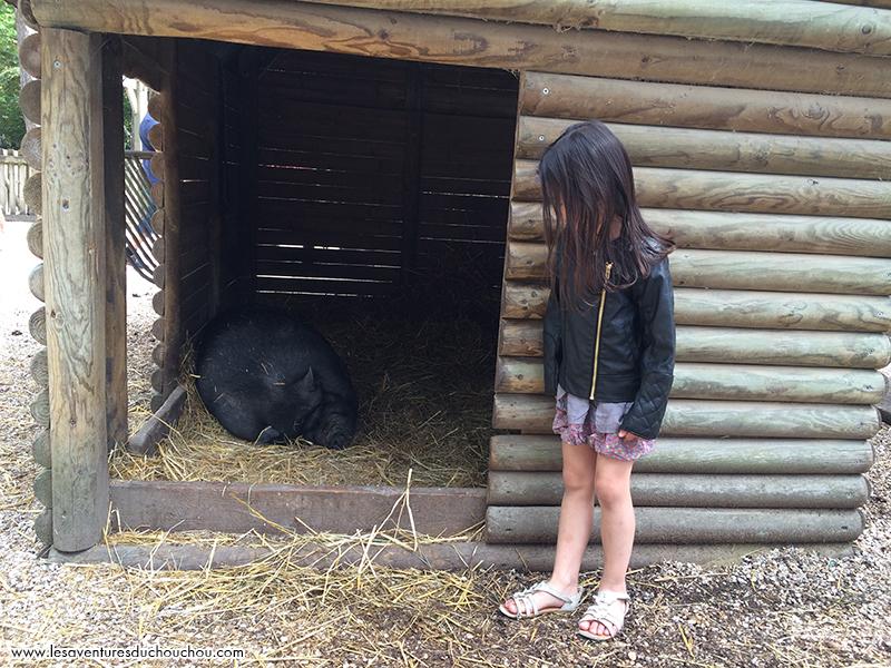 Center Parcs ferme animaux