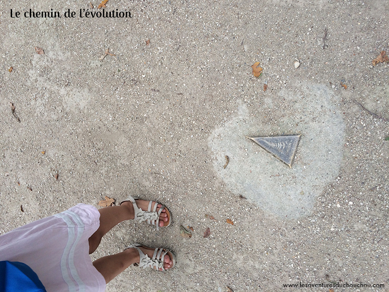 Chemin de l'évolution du Parc Floral de Paris