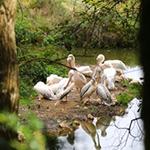 Zoo du bois d'Attily