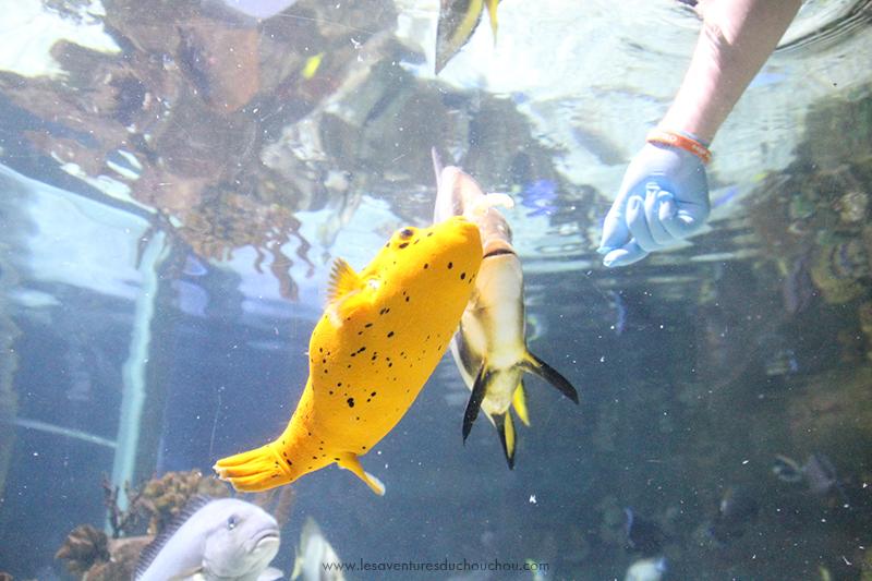 nourrissage poissons