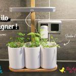 Test de Lilo (jardin potager d'intérieur) + Concours