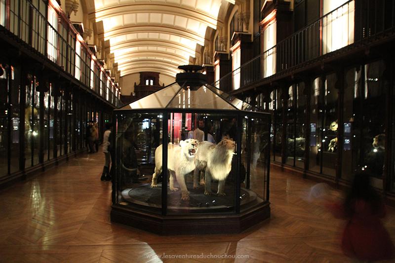 Museum national histoire naturelle