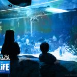 On a visité l'aquarium SEA LIFE Paris Val d'Europe