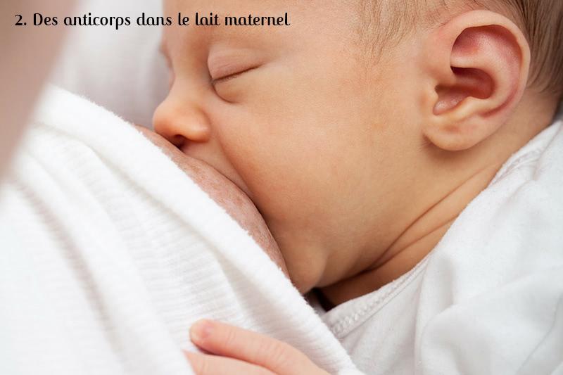 anticorps dans le lait maternel